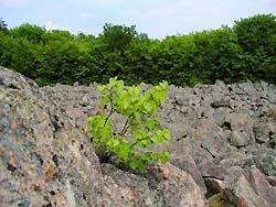 Npr kamenné more pri vyhniach - najznámejšia prírodná pamiatka v
